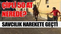 İBB'nin MHP'li belediyeye hibe ettiği atlar kayboldu !